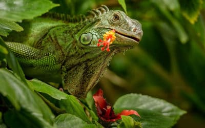 What plant do iguanas hate? Here's our list of plants that iguanas do not eat